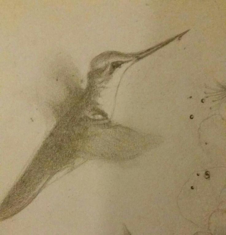 colibri, técnica lápiz grafito sobre papel.