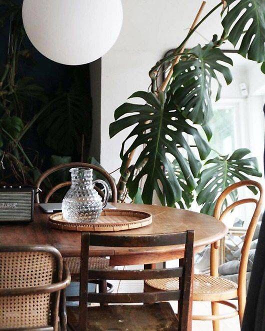 Dark walls, tropical plants and plain wood furniture.