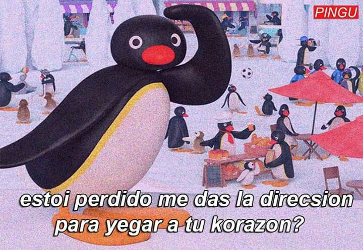 Pingu Memes Espanol Frases De Pinguinos Imagenes Anime Con