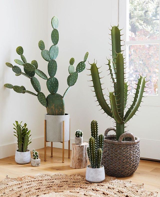 Plants Cactus Planter Houseplants Homedcor Midcenturymodern Midmod Livingroomdecor Decor Homedec Plant Decor House Plants Decor Cactus House Plants
