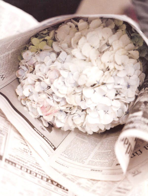 Hydrangeas wrapped in newspaper