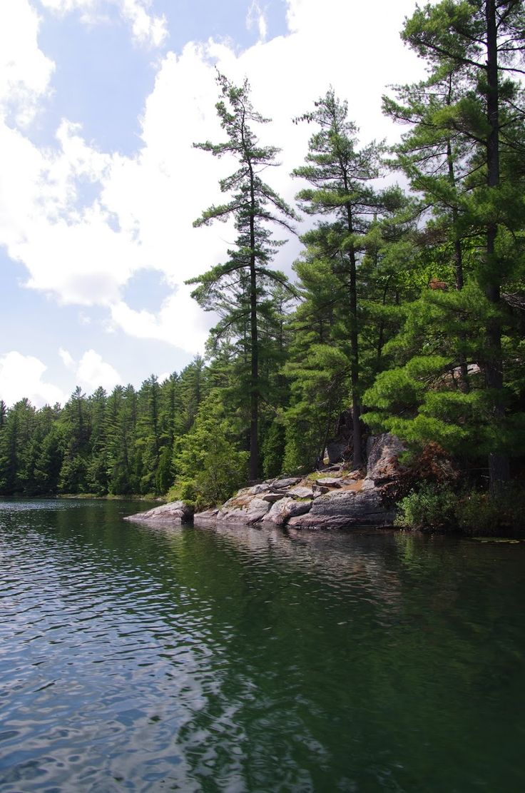 'White Pines'