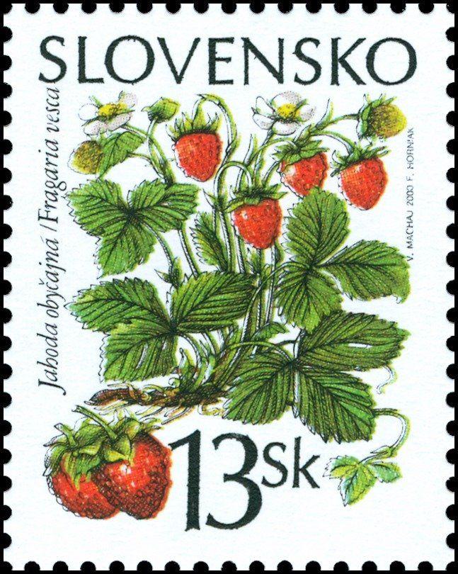 Stamp: Common Strawberry - Fragaria vesca (Slovakia) (Forest Fruits) Mi:SK 376,Sn:SK 363b,Yt:SK 328,AFA:SK 358,POF:SK 216
