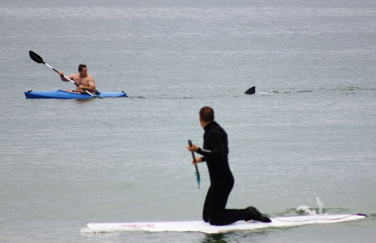 The shark and the kayaker