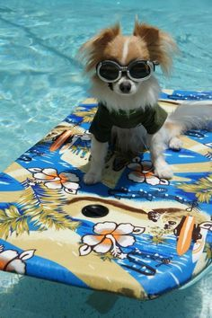 One of our team members - Blue Haven Pools #joke