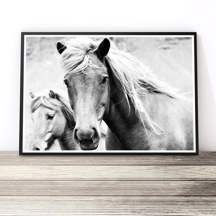 Black and White Print | Horse Photography Art Print | Equine Photography | Horse Decor | Boho Decor | Wild Horses Wall Art by Little Ink Empire