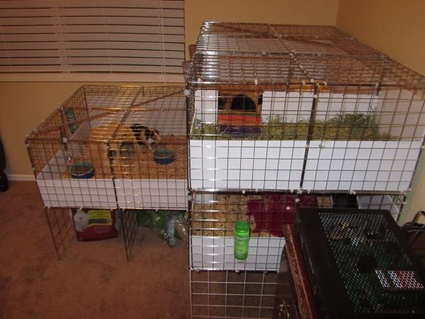 3 story cage for guinea pigs cats meow guinea pigs for Guinea pig cage for 3