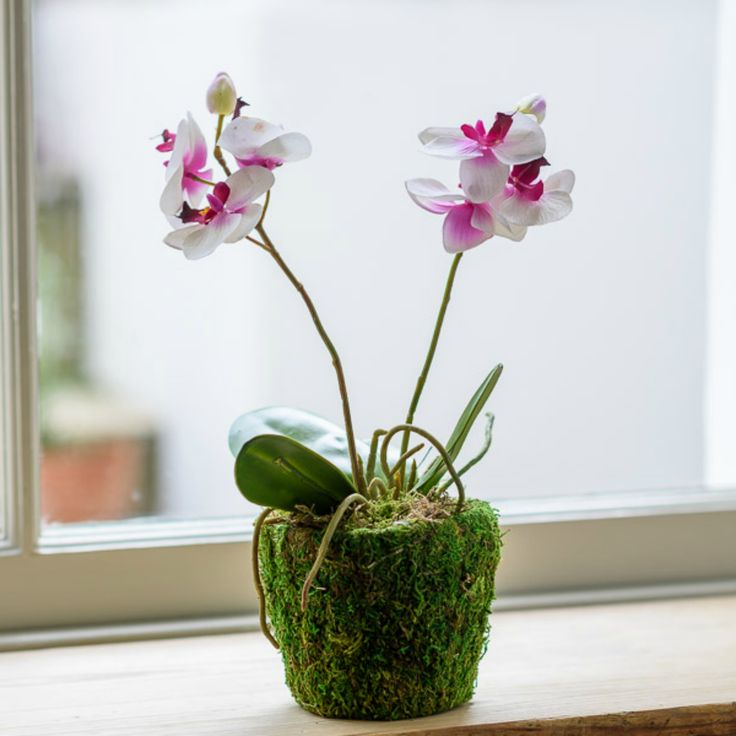 ARTIFICIAL ORCHID WITH MOSS POT
