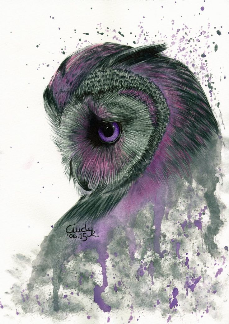 Purple Owl by Cindy-R.deviantart.com on @DeviantArt