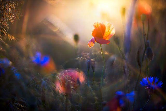 Σκέψεις : Η ψυχή ....Μάρω Βαμβουνάκη