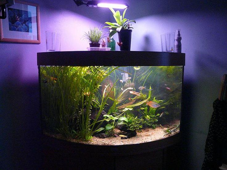 purple corner aquarium decoration ideas pictures
