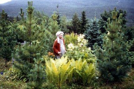 Trädgårdsfrossa i norr