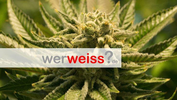 Kommt die Cannabis Legalisierung in Deutschland?