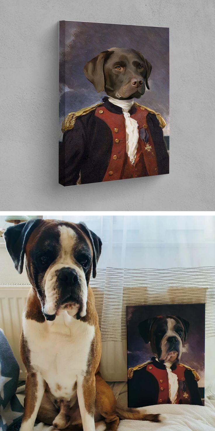 Der Admiral In 2020 Mit Bildern Haustierfotos Haustiere Tiere