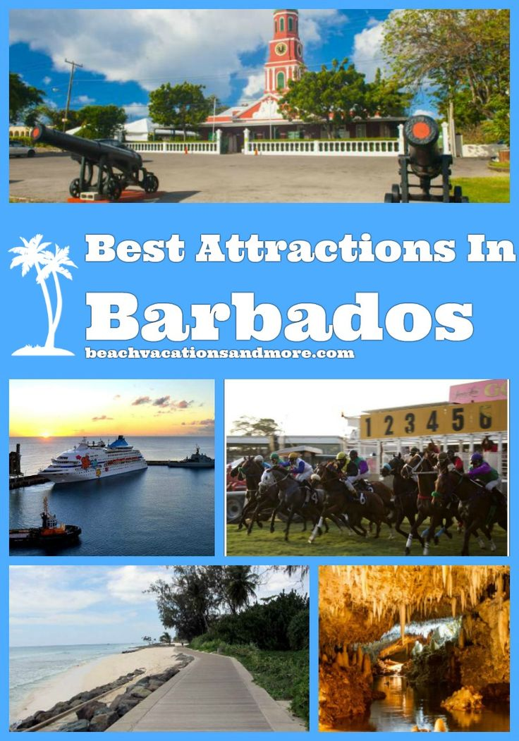 Must-see Barbados attractions and points of interest: Harrison's Cave, Bridgetown Cruise Port, Animal Flower Cave, Stavronikita Shipwreck, Barbados Wildlife Reserve, Orchid World, Mount Gay Rum Distilleries and more