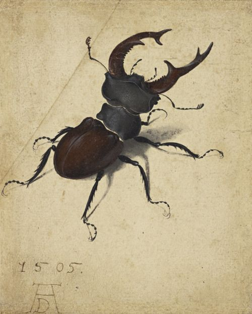 """humanoidhistory: """"Stag Beetle, illustrated by Albrecht Dürer, Germany, 1505. """"It is indeed true,"""" he wrote, """"that art is omnipresent in nature, and the true artist is he who can bring it out. """""""