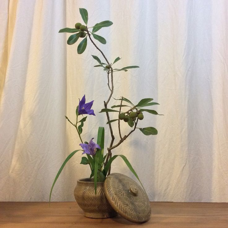 Container: Original container by Aso Kojima Material: Wax myrtle, Bellflower and Japanese pampas grass  花器: 小嶋亜創創作器 花材: 山桃、桔梗、薄  #花 #いけばな #flower #ikebana #art #小嶋亜創