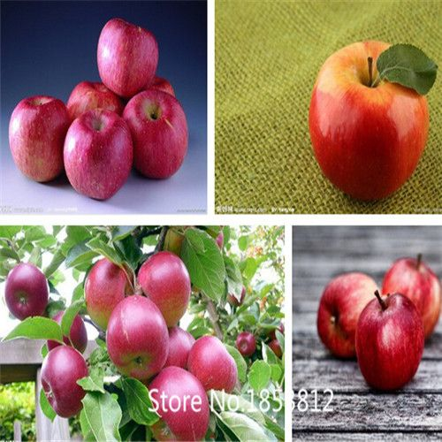 Sale!30pcs 10kinds Apple Seeds 2016 Organic Heirloom Seeds Fruit Seeds NON-GMO Chinese Rare Tree Seeds Free Shipping