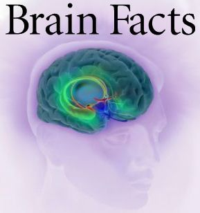 40 facts about sleep you probaly didn't know & brain facts