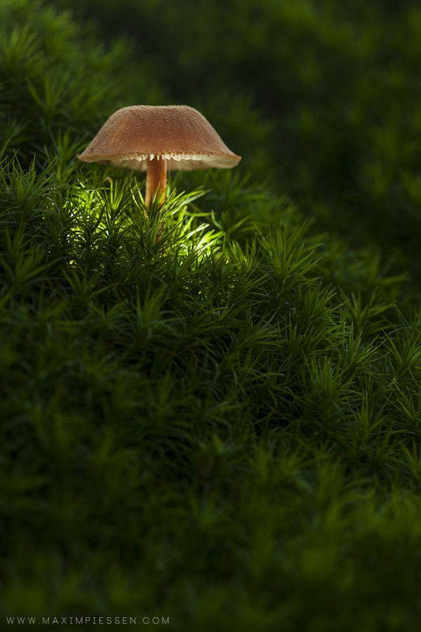 mushroom moss