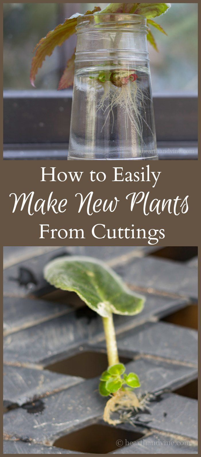 See how easy it is to root plants in water with cuttings. This propagation method works on many varieties, giving you more beautiful plants for free.