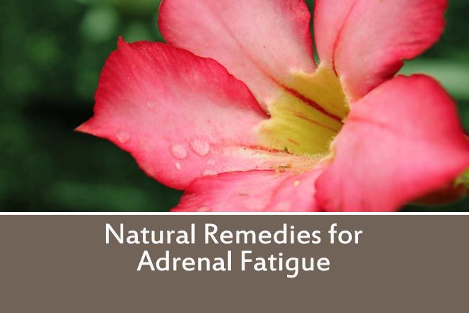 What is Adrenal Fatigue? Could you be suffering from Adrenal Fatigue?Tired for no reason? Feel run down or overwhelmed? Craving sweet or salty foods?You may want to watch this. Renowned Natural M...