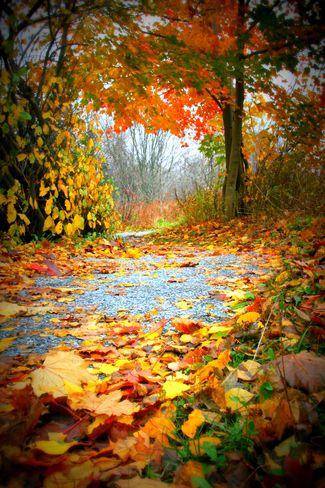 Fall trail in New Brunswick