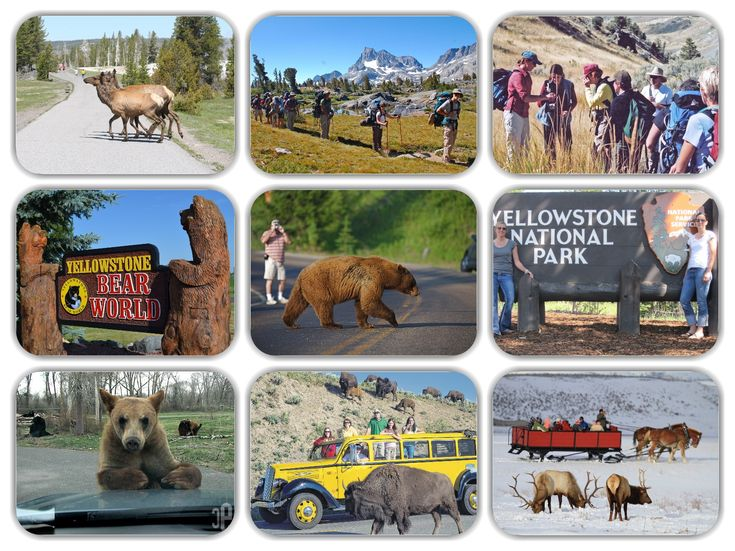 Private tours to view wildlife are a great way to get up close and personal with nature's finest specimens, Yellowstone National Park is Amazing..