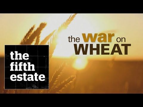 The War on Wheat - the fifth estate - YouTube --It's a multi-billion dollar battle for your belly. Millions of people are joining the anti-wheat revolution.  What if Dr. Davis of Wheat Belly is wrong?
