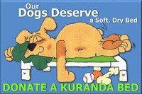 Dallas car donation #humane #society #of #dallas #county, #humane, #society, #dallas, #county, #texas, #dog #and #kitty #city, #dog # # #kitty #city, #dog, #kitty, #city, #dogs, #cats, #cat, #animals, #animal, #pets, #pet, #shelter, #no #kill, #no-kill, #no, #kill, #rescue, #adoption, #adoptions, #adopt, #charity, #cause, #tax #deductible, #donation, #donate, #help, #volunteer, #volunteering, #sanctuary, #guardian, #angel, #dallas #animal #shelter, #dallas #animal #shelters, #dallas #humane…