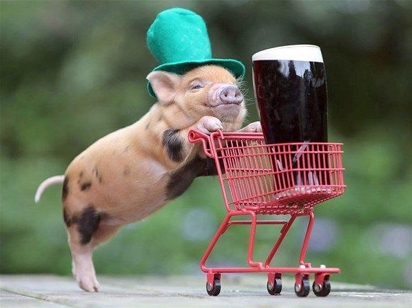 St Patricks Day mini varken (© Richard Austin/Rex Features)