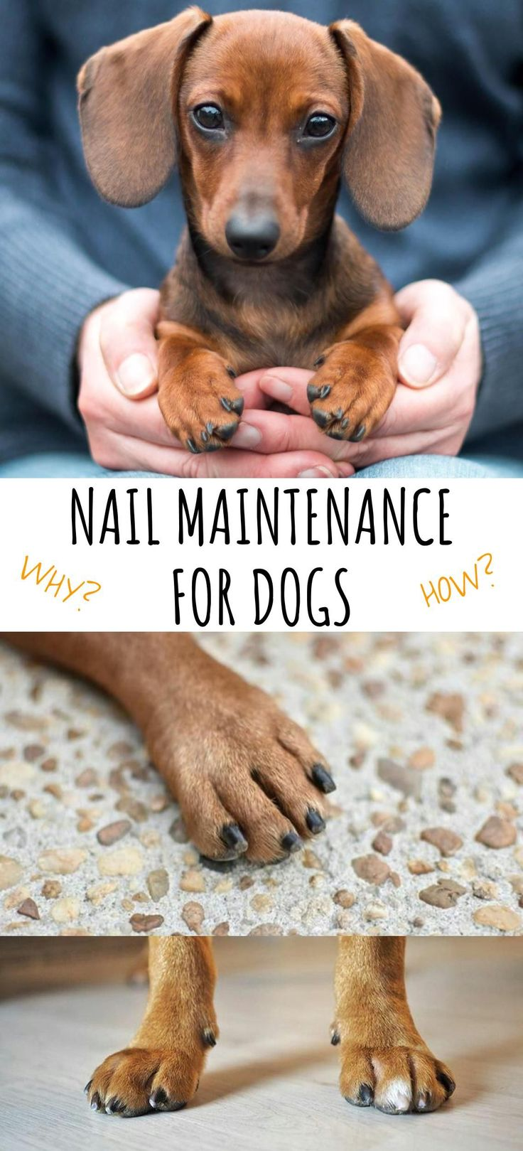 Nail Maintenance For Dogs - How to Take Care of Your Dog's Nails