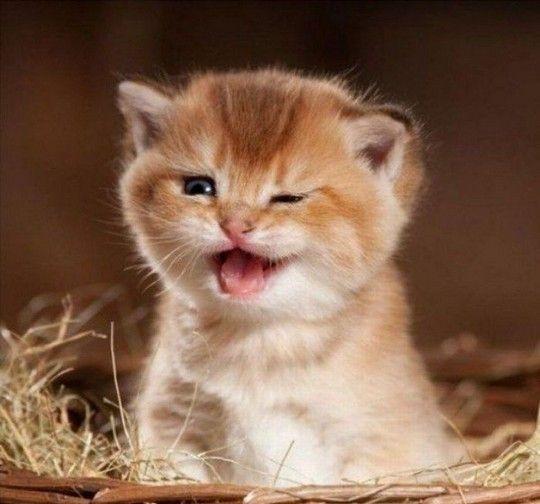 Winkin' kittenHappy Mondays, Kitty Cat, Dogs, Happy Face, Wink, Adorable, Cute Kittens, Kittycat, Animal
