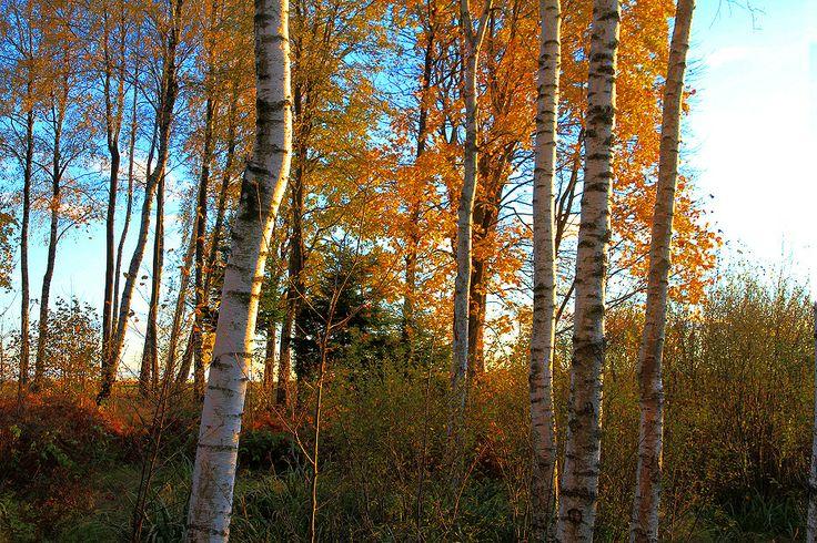 trees summer alaska - photo #21