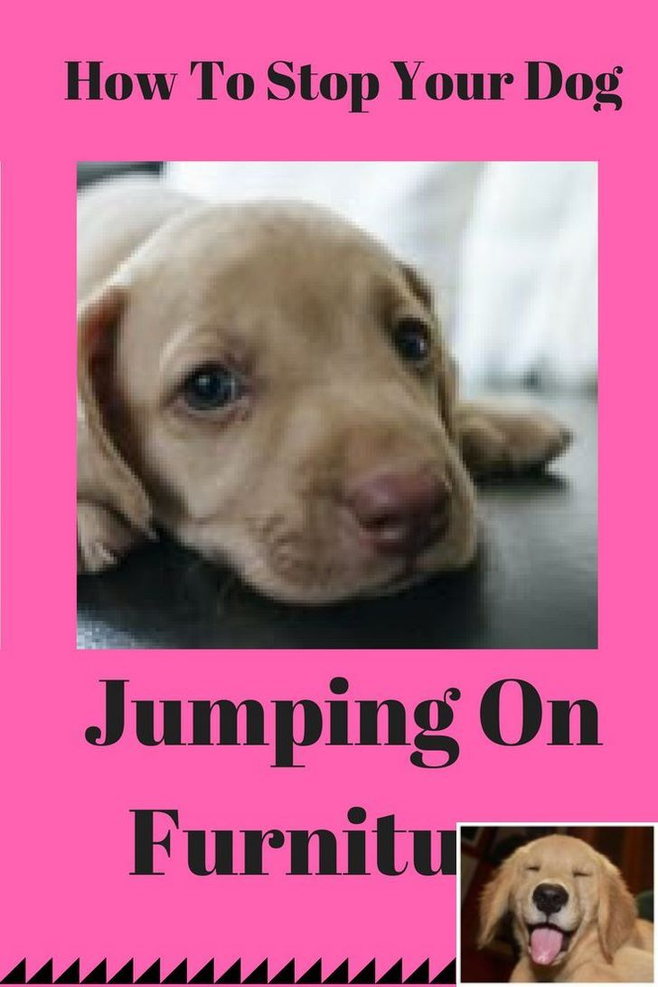Stop Dog Jumping And Caesar Milan Dog Training Check The Pin For