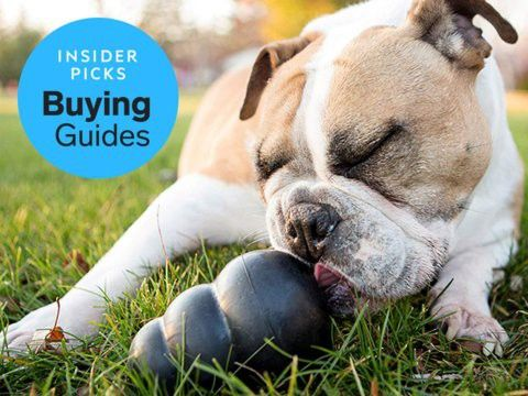 The Best Chew Toys For Dogs That Chew On Everything Business