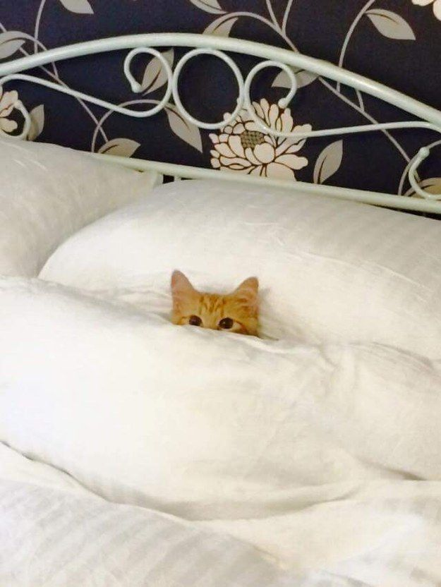 This cat who has the right idea and would just prefer to cuddle. | 31 Adorable Things To Keep You Warm Throughout The Storm