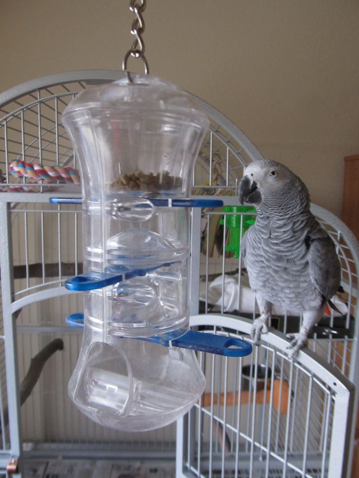 Bird Toy Outlet : Best images about my pampered parrot on pinterest