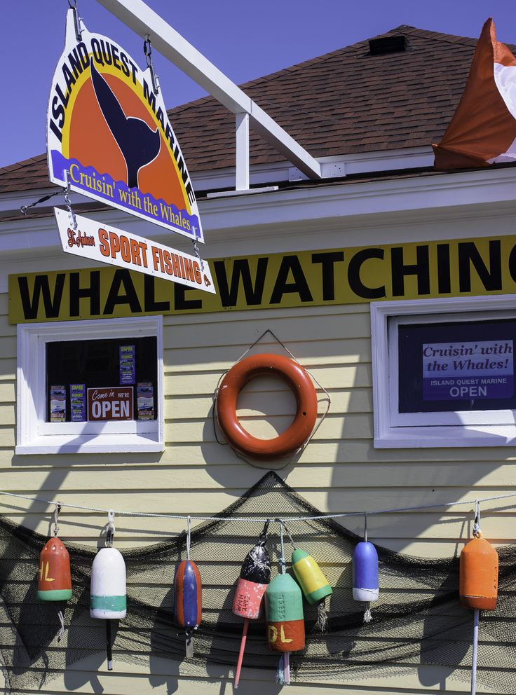 Whale-watching in New Brunswick, Canada