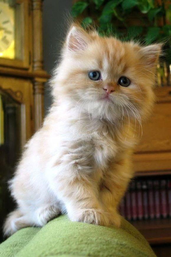 Needle Felted Cute Fluffy Kitten Orange Tabby: Miniature Wool  |Fluffy Orange Kittens