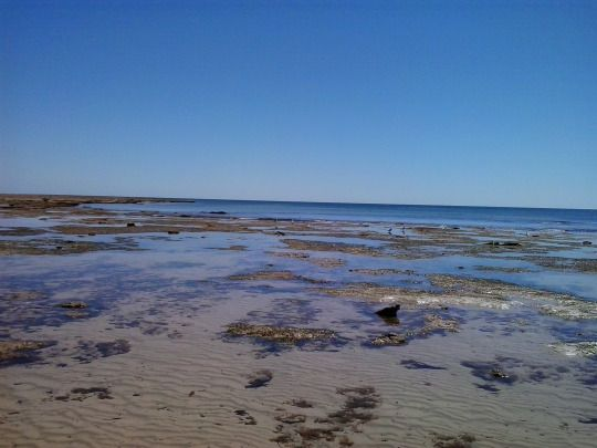 Beautiful Snapper Point, South Australia. The tidal flats are home to a myriad of creatures.