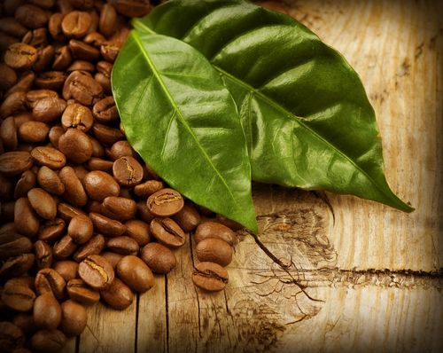 Green Coffee Bean Extract : A Detailed Review - http://www.daddynutrition.com/green-coffee-bean-extract-review/