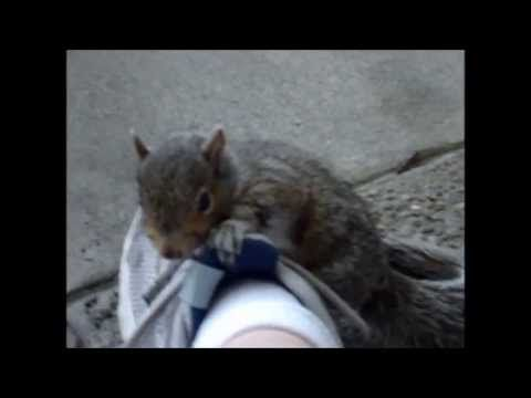 There's a baby squirrel on my shoe...