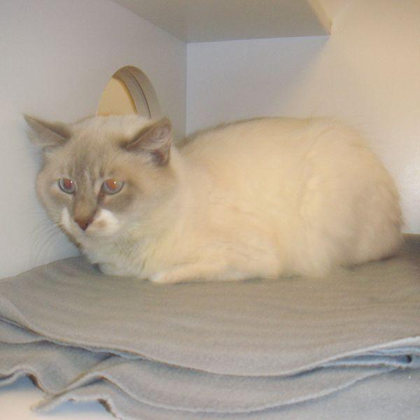 Pets For Adoption Petfinder Pet Adoption Animal Projects Animal Shelter