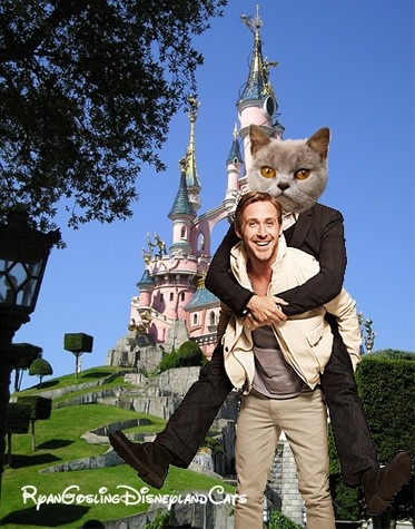 Ryan Gosling + Disneyland Cats I don't get it, but I can't help but laugh at this