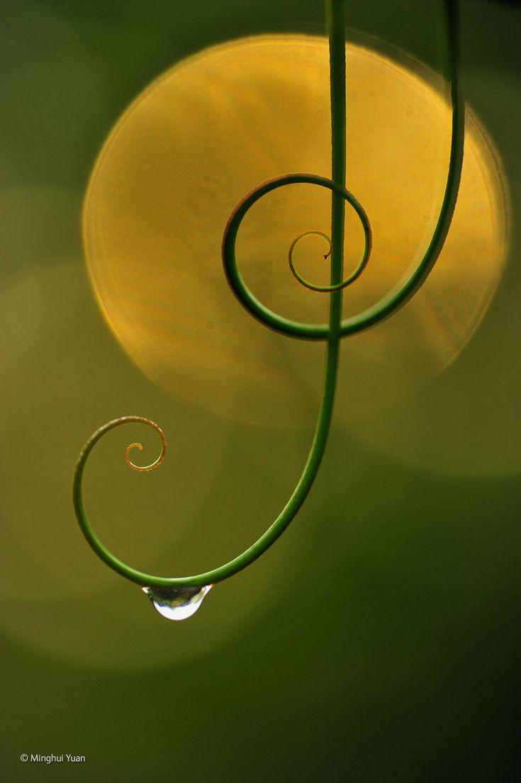 Natürliche Harmonie. Naturhistorisches Museum Fotografie des Jahres 2014 ausstellen