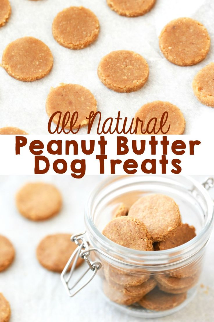 These Peanut Butter Dog Treats are incredibly easy to make and your dog will absolutely love them. #dogtreats #homemade #peanutbutterdogtreats