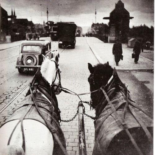 photographer of the month: Václav Chochola, Postal service horses, Prague 1947