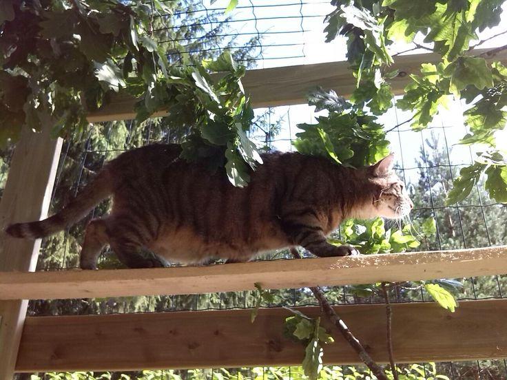 Pekka kissa-aitauksessa