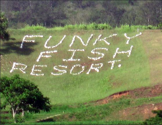 www.funkyfishresort.com